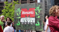 May 24, 2014 | March Against Monsanto, Chicago. (Photo/ Emily Brosious)