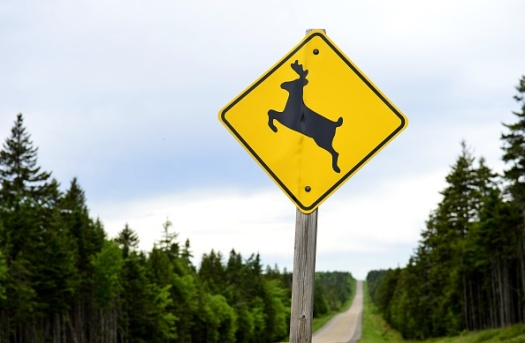 deer eats hemp